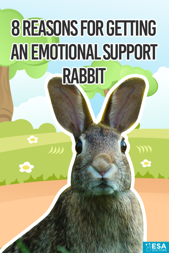 Qualify for an emotional support rabbit letter below.